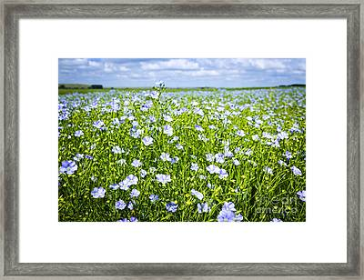 Blooming Flax Field Framed Print