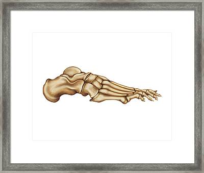 Bones Of The Foot Framed Print