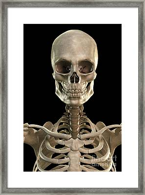 Bones Of The Head And Upper Thorax Framed Print