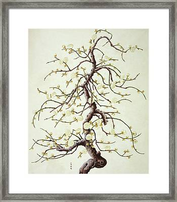 Botanical Illustration Framed Print by Natural History Museum, London/science Photo Library