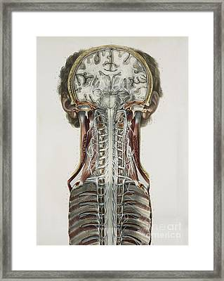 Brain And Spinal Cord, 1844 Artwork Framed Print