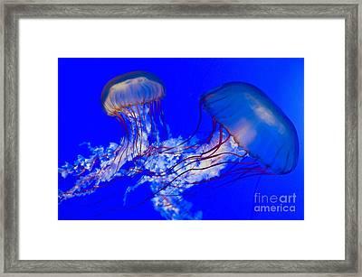 Brown Jellyfish Framed Print