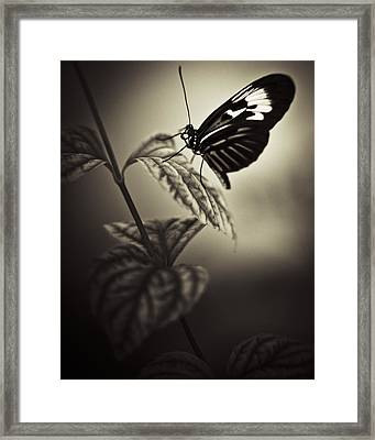 Butterfly Brown Tone Framed Print