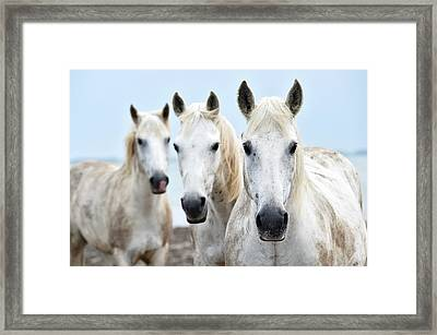 Camargue Horses Framed Print by Dr P. Marazzi