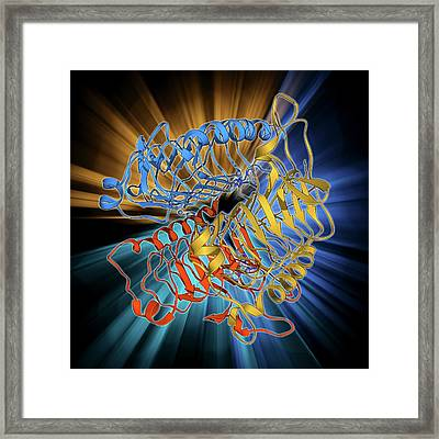 Carbonic Anhydrase Molecule Framed Print