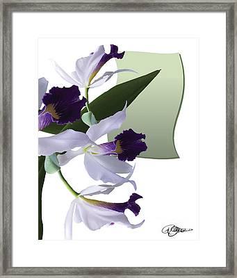 Cattleya Valentine Triage Dafoi Art 1 Of 3  Framed Print by Ruth  Benoit