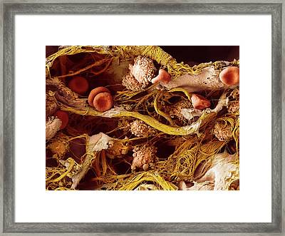 Cells In Lung Tissue Framed Print by Microscopy Core Facility, Vib Gent