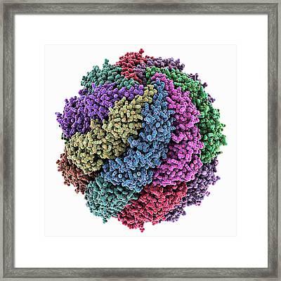 Chaperonin Folding Protein Framed Print by Laguna Design