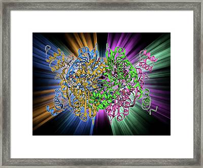 Cholesterol Producing Enzyme And Statin Framed Print