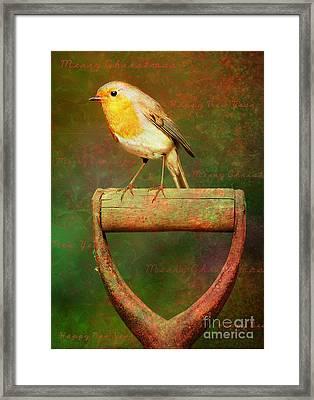 Christmas Robins Framed Print
