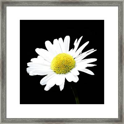 Daisy Flowers  Framed Print by Tommytechno Sweden