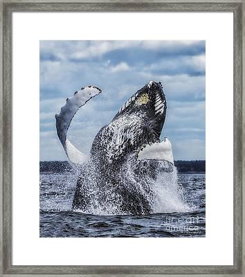 Framed Print featuring the photograph Dances With Whales by Nancy Dempsey