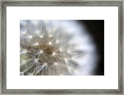 Dandelion Backlit Close Up Framed Print