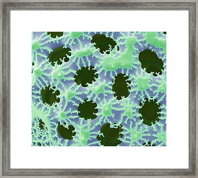 Diatom Detail Framed Print by Steve Gschmeissner
