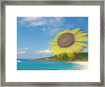 Sunflower Facing The Oceans  Framed Print