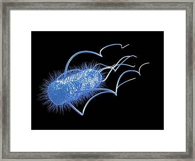 E. Coli Bacterium Framed Print