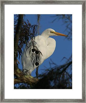 Egret Framed Print by Jeff Wright
