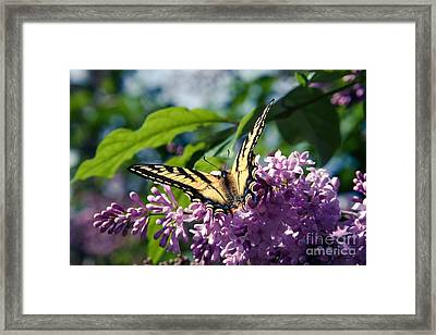 Expectation Of The Dawn Framed Print by Sharon Mau