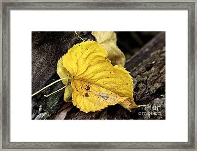 Fall Framed Print by Rick Rauzi