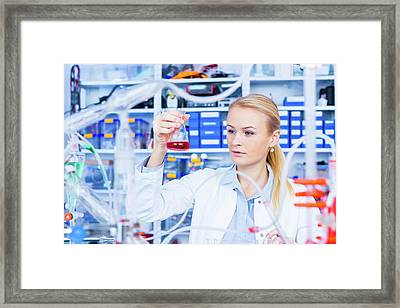 Female Chemist Working In Lab Framed Print by Wladimir Bulgar/science Photo Library