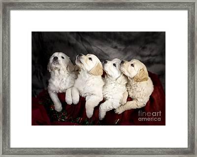 Festive Puppies Framed Print by Angel  Tarantella