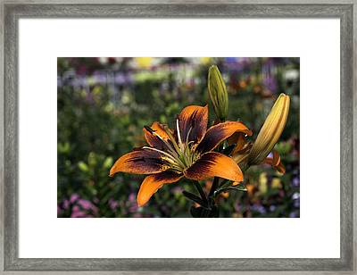 Flower Framed Print by Sanjeewa Marasinghe