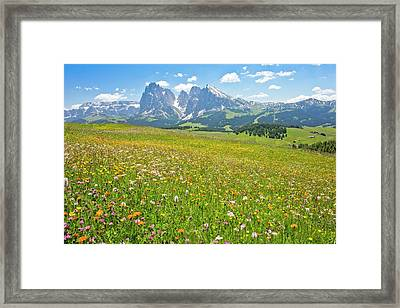 Flowery Alpine Meadow Framed Print