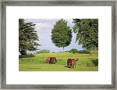 4 For Lunch Framed Print