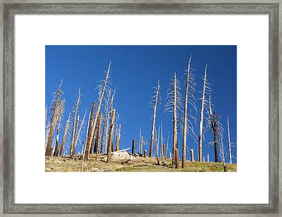 Forest Destroyed By Wild Fires Framed Print by Ashley Cooper