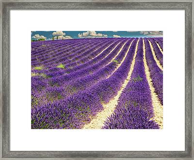 France, Provence, Lavender Field Framed Print by Terry Eggers