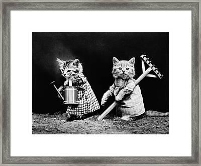 Frees Kittens, C1914 Framed Print by Granger