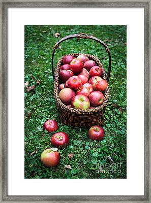 Fresh Picked Apples Framed Print by Edward Fielding