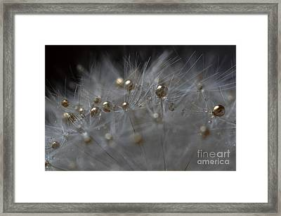 Framed Print featuring the photograph Golden Flower by Sylvie Leandre