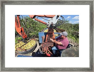 Grapefruit Farming Framed Print by Jim West