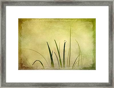 Grass Framed Print by Svetlana Sewell
