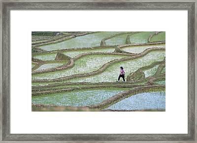Hani Rice Terraces Near Yuanyang Framed Print by Tony Camacho