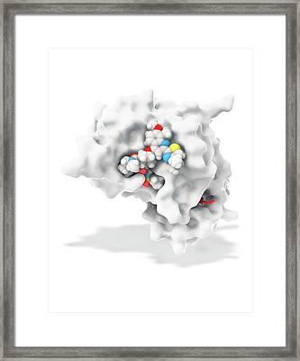 Hepatitis C Drug Bound To Enzyme Framed Print