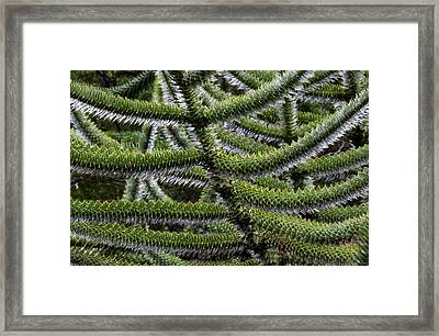 Huerquehue National Park, Chile Framed Print