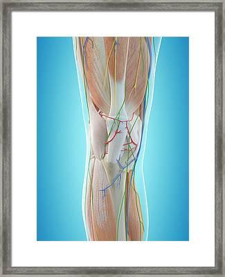 Human Arm Anatomy Framed Print