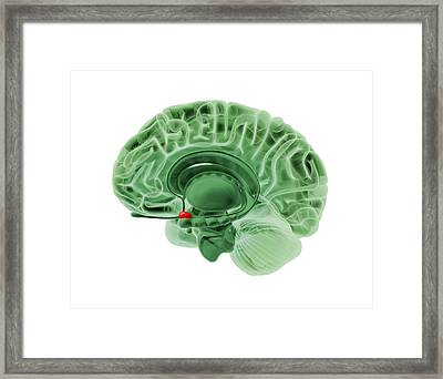 Human Brain, Artwork Framed Print by Science Photo Library