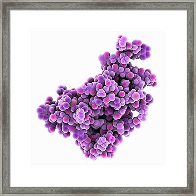 Human Prion Protein Framed Print