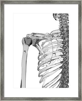 Human Shoulder Joint Framed Print by Sciepro