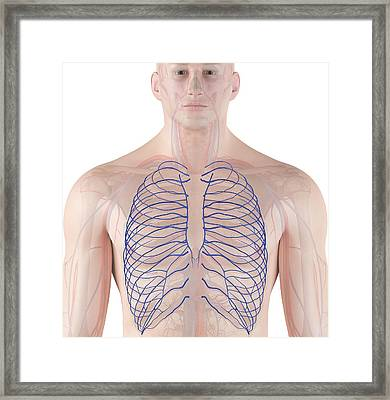 Human Veins Framed Print by Sciepro