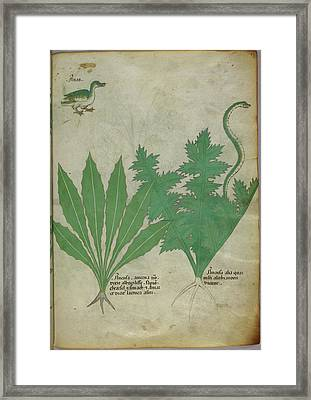 Illustration Of Plants Framed Print by British Library