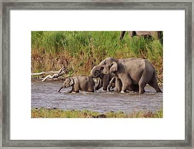 Indian Asian Elephants, Crossing Framed Print by Jagdeep Rajput