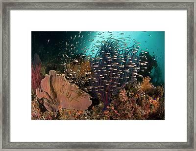 Indian Ocean, Indonesia, Raja Ampat Framed Print