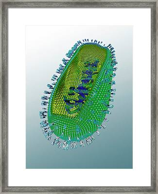 Influenza Virus Framed Print