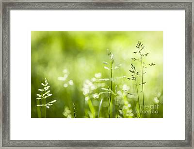 June Grass Flowering Framed Print