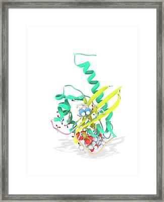 K-ras Benzamidine And Gtp Complex Framed Print