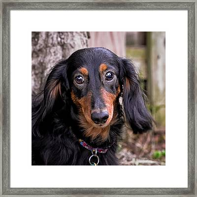 Katie Framed Print by Jim Thompson